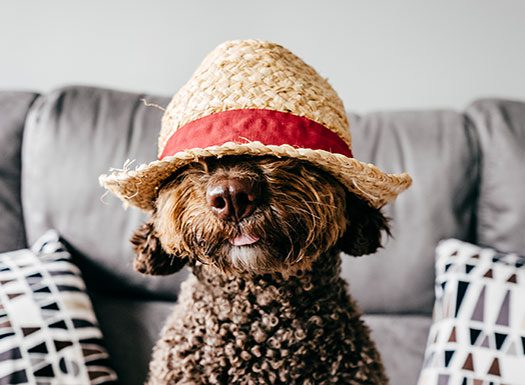 dog in hat on couch